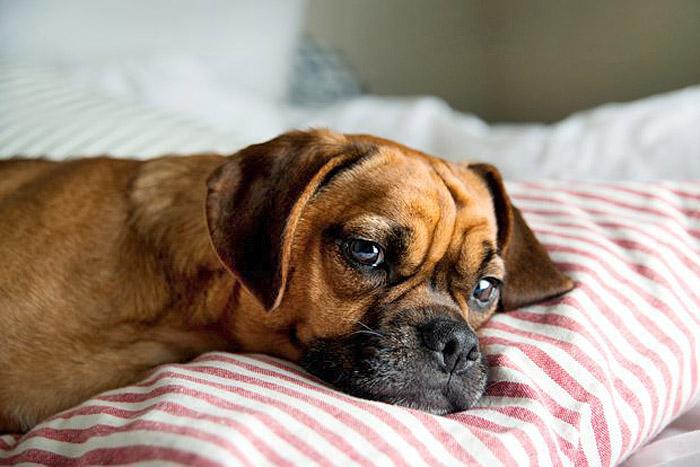 Как приспособить квартиру для собаки